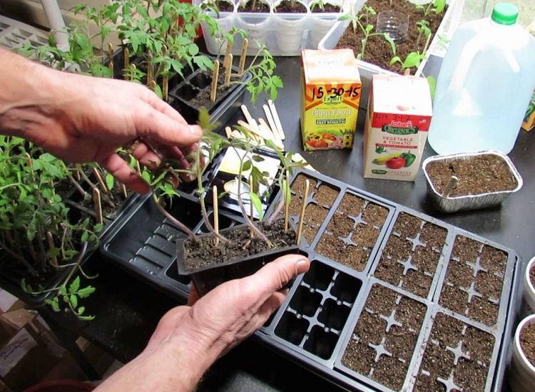 Start Seeds Indoors
