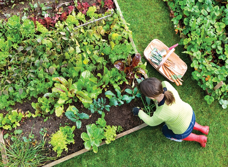 Top 10 Secrets Revealed for a Flawless and Frugal Garden