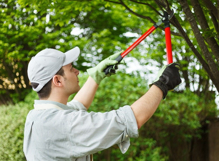When Is the Best Time of the Year to Prune Trees?